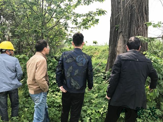 张家港古银杏现场会诊