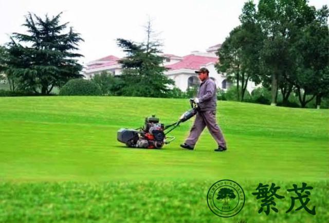 高尔夫球场草坪专业养护管理案例
