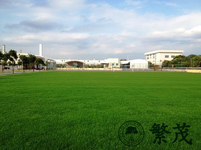 足球场草坪专业养护管理案例