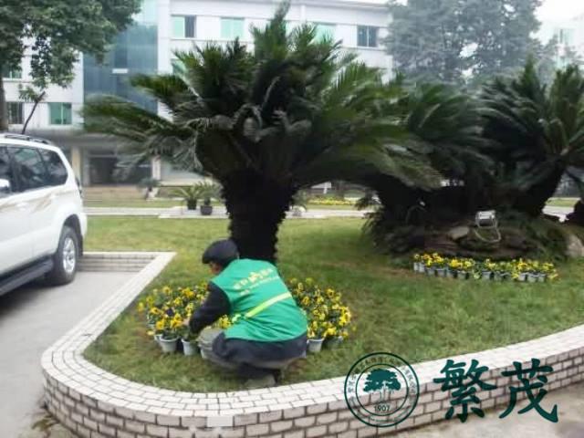 苏州某学校绿化养护案例