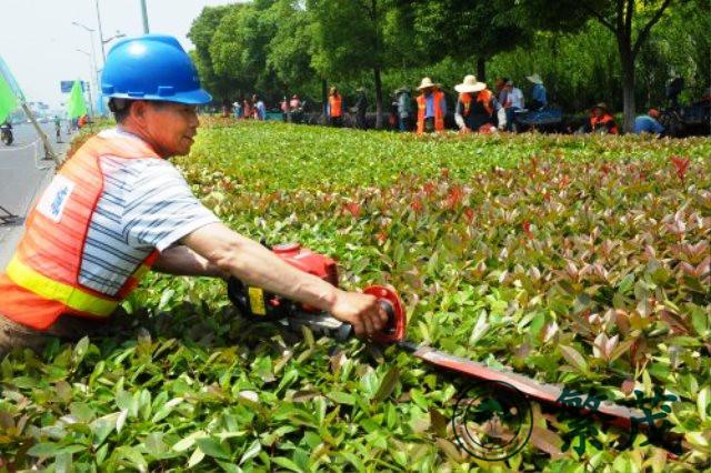 苏州某高档小区绿化养护案例