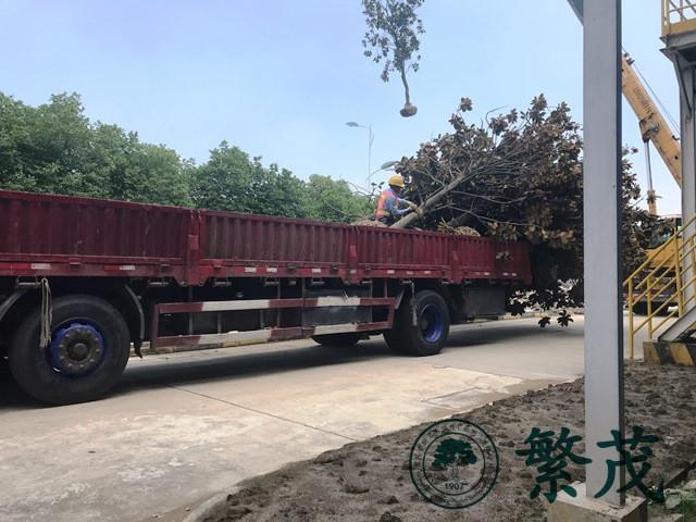 苏州工业园区某单位树木种植工程案例