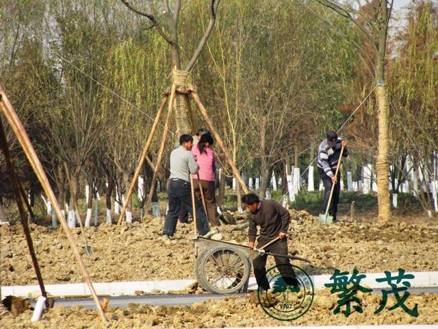 苏州吴江区某湿地公园绿化工程案例