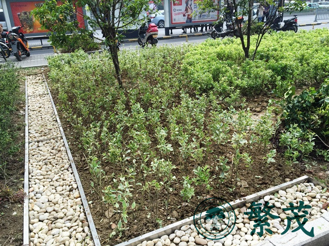 苏州某控制中心绿化改造工程案例