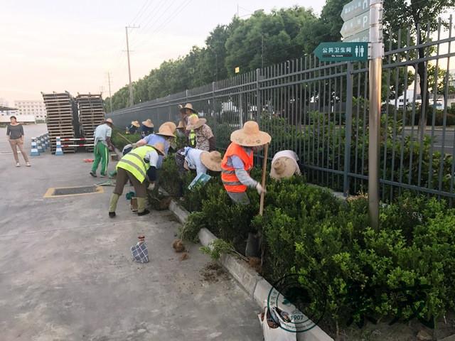 苏州某物流公司绿化改造工程案例