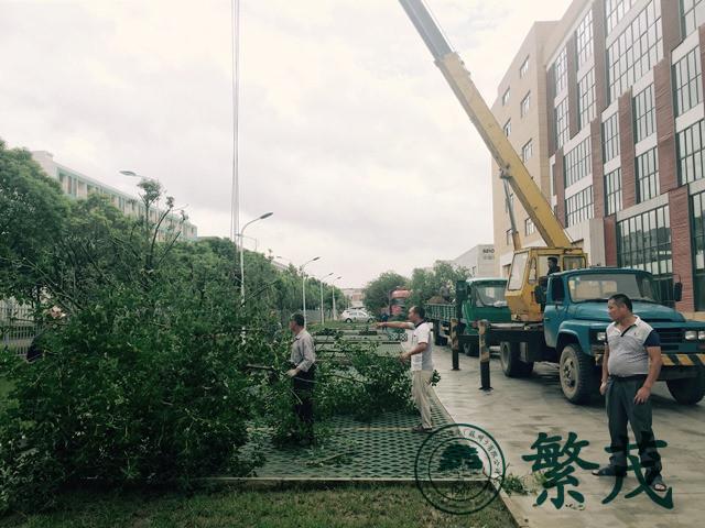 苏州工业园区某企业绿化种植工程案例