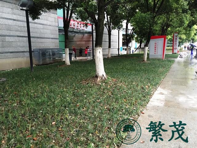 苏州博览中心一期绿化改造工程案例