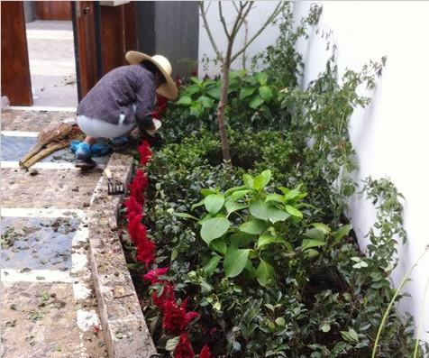 苏州中粮本岸某庭院绿化种植案例