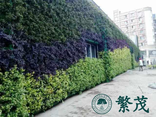 南京某开发商户外立体植物墙案例