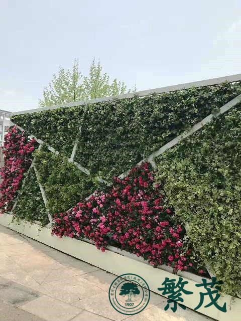 苏州某主题公园植物墙展示