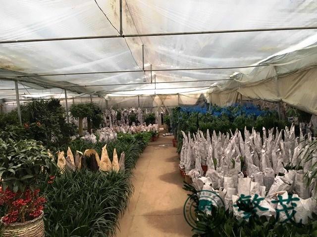 室内盆栽植物基地展示