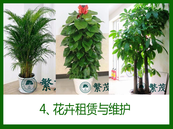 4、室内盆栽植物设计摆放与维护