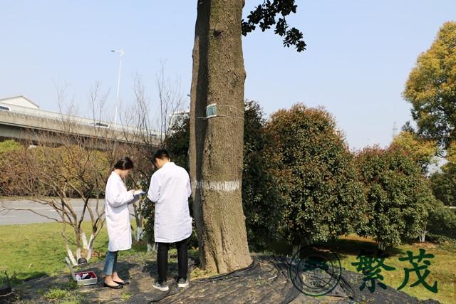 【古树专题】胡章翠在全国古树名木抢救复壮业务培训班上
