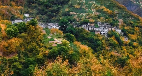 【古树专题】护古木种林下 林长制守护黄山绿意